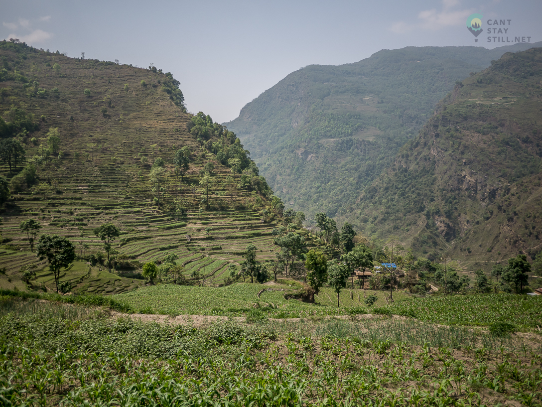 terraced fields and lush vegetation at low altitudes on the Annapurna Circuit in Nepal