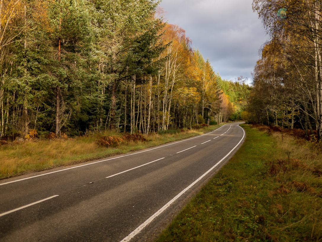 road cutting through the forest in autumn