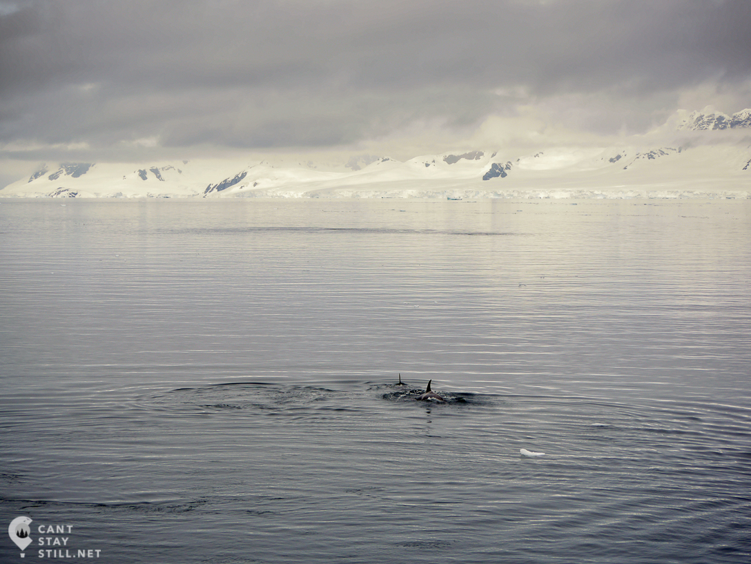 a pod of whales in the distance, Antarctica
